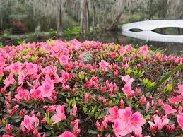 magnolia plantation and gardens tells