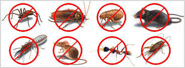 Pest We Control | A2 Beverlywood AAA Pest Control