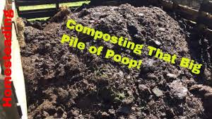 posting cow manure you