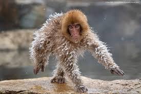 تعر فوا إلى الصور المرش حة لجائزة أفضل صورة مضحكة للحيوانات البرية