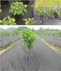 china polypropylene woven garden weed