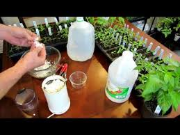 eggshell vinegar fertilizer