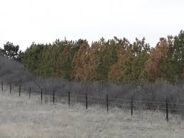 Windbreak Management Nebraska Forest Service