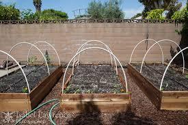 vegetable garden tips for healthy foods