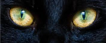 cats have such strange haunting eyes
