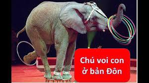 Chú voi con ở bản Đôn- Ngọc Ngân- Nhạc Thiếu Nhi và xiếc voi hay ...