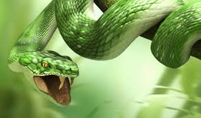 3d snake hd for laptop 1366x768
