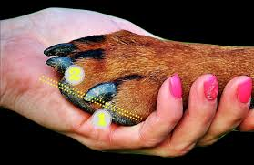 how to cut dogs nails without pain or