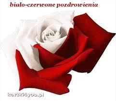 Kartki4you Ekartka Biało-czerwona róża i pozdrowienia dla Ciebie ...