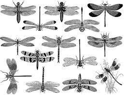 Dragonfly Decals For Ceramic Glass And Enamel Custom Ceramic Decals Glass Fusing Decals Ceramic Luster Decals