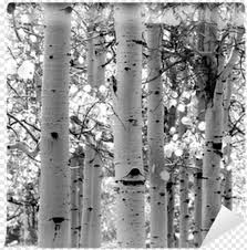 Aspen Tree Wall Decal Hd Png Download 400x400 2063810 Png Image Pngjoy