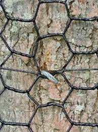 Using Trees For Fence Installation Deerbusters Com
