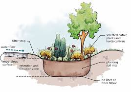 maintenance ideas for rain gardens and
