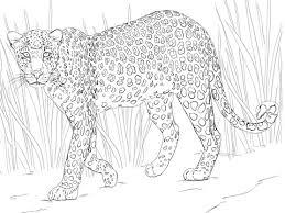 Afrikaans Luipaard Kleurplaat Gratis Kleurplaten Printen