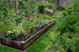herb garden in you own backyard