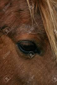 Close-up Of Eye Of Brown Horse, Ada Cole Rescue Centre, Redwings.. Stock  Photo, Picture And Royalty Free Image. Image 27598223.