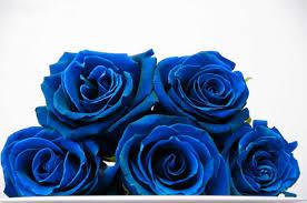 صور ورود زرقاء ورود زرقاء جذابة ومعناها الاصدقاء للاصدقاء