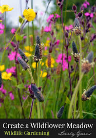 creating a wildflower meadow lovely