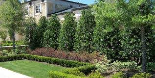 Planting A Privacy Screen Landscaping Network