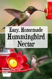 hummingbird food recipe brown thumb mama