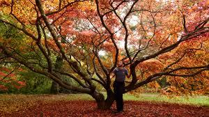 "TravelTedaldi on Twitter: ""I think autumn may be my favourite season...  anyone else? #leaveschanging #naturesfireworks #colourfulautumn #treelove  #crunchyunderfoot #westonbirtarboretum #travelbloggerlife #explorelocal  #localliving ..."