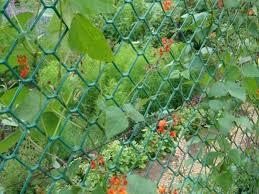 1m X 5m Green Plastic Garden Fencing 50mm Holes Mesh Netting Plant Support Net Sfhs Org