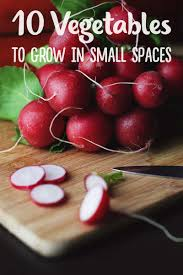 gardening in small spaces 10 best