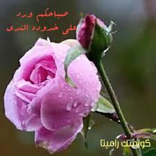 صباحات جميلة ارق من رقيق الورد لعيون كل سنتر راميتا العالمي