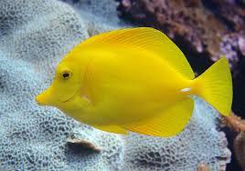 37+ Best Aquarium Fish In The World Images