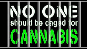 """Image result for in jail for cannabis"""""""