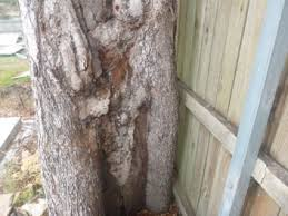 View Termite Holes In Tree Images