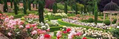 image result for rose garden dubai