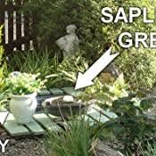 Ronseal Rslgpsa750 Gpsa750 Garden Paint Sage 750ml 750 Ml Amazon Co Uk Diy Tools