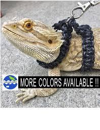 bearded dragon para cord harness