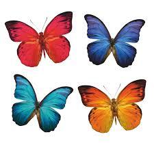 8 Large Butterfly Window Clings For Glas Buy Online In El Salvador At Desertcart