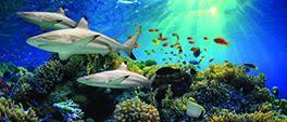 off national aquarium baltimore