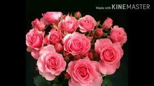 ورد بألوان مختلفه للعشاق الورد مع اغنيه ورده حمره Youtube