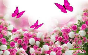 تحميل خلفيات الزنبق الأبيض الفراشات الوردي الورود وهج عريضة
