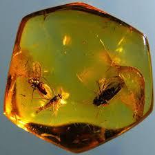 Resultado de imagen de Insectos fosilizados de millones de años de edad