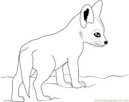 cute baby fox coloring page free fox