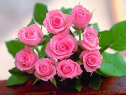 صور اجمل ورد افضل خلفيات زهور حبيبي