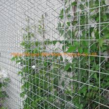 China 10 12 14 Long 48 Wide Decorative 3d Welded Wire Mesh Greenscreen Panels For Plant Climbing Grid China Welded Wire Mesh Panel Ss Welded Wire Mesh Panel