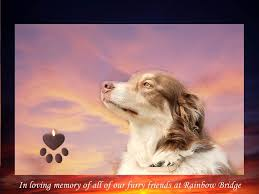 in memory of all furry friends at rainbow bridge pictures photos