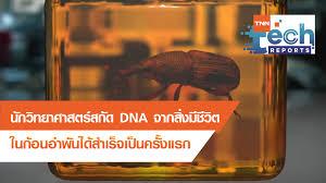 สกัด DNA จากสิ่งมีชีวิตในก้อนอำพันได้สำเร็จ