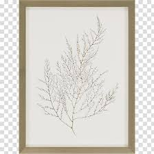 Frames Wall Decal Painting Mirror Molding Transparent Background Png Clipart Hiclipart