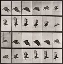 Eadweard Muybridge: The Curious Forefather of Cinema | AnOther
