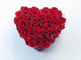 صورة قلب ورد