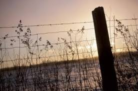 How To Put Chicken Wire On A Vinyl Fence