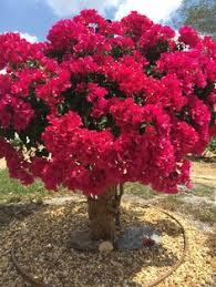 Les 929 meilleures images de Arbres en fleurs | Pelouse et jardin ...