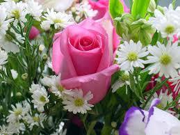 اجمل وردة في العالم احلى الورود فى العالم كارز